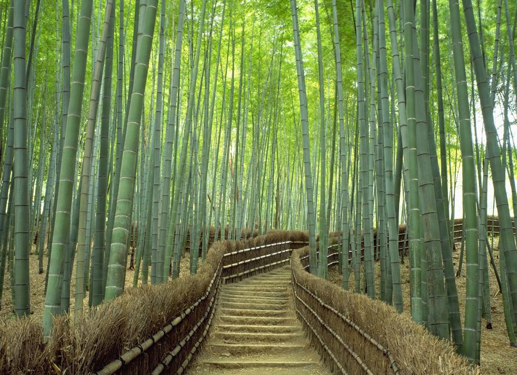 【2021年】京都旅館のおすすめ人気ランキング